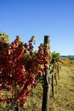 Vineyards in Langhe. Vineyards of the Langhe, Piedmont - Italy Stock Photos