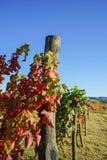 Vineyards in Langhe. Vineyards of the Langhe, Piedmont - Italy Stock Images