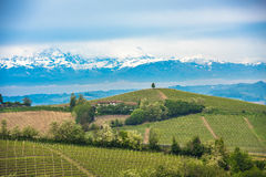 Vineyards of Langhe, Piedmont, UNESCO world heritage Stock Images