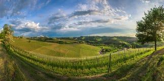 Vineyards of Langhe, Piedmont, UNESCO world heritage Royalty Free Stock Image