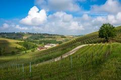 Vineyards of Langhe, Piedmont, UNESCO world heritage Royalty Free Stock Photo