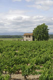 Vineyards in Languedoc-Roussillon (France) at summer Stock Photography