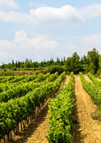 Vineyards in Languedoc-Roussillon Stock Image