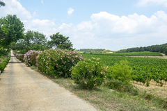 Vineyards in Languedoc-Roussillon Royalty Free Stock Photography