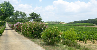 Vineyards in Languedoc-Roussillon Royalty Free Stock Images