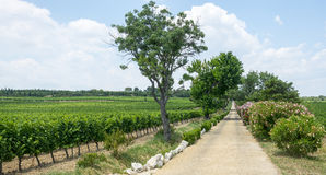 Vineyards in Languedoc-Roussillon Royalty Free Stock Photos