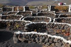 Vineyards on Lanzarote, Spain Royalty Free Stock Image