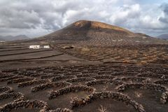 Vineyards in Lanzarote royalty free stock image
