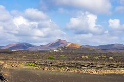 Vineyards with lava fields and volcanoes in background in La Geria royalty free stock photo
