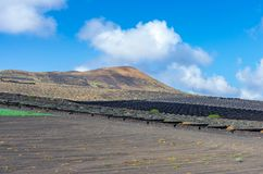 Vineyards with lava fields and volcanoes in background in La Geria royalty free stock photos