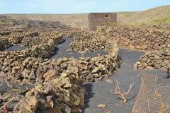 Vineyards on lava soil. Lanzarote, Spain, Europe. royalty free stock image