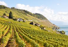 Vineyards in Lavaux Stock Images