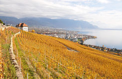 Vineyards in Lavaux against Geneva lake, Switzerland Stock Photo