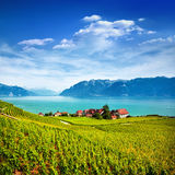 Vineyards in Lavaux area, Switzerland Royalty Free Stock Image
