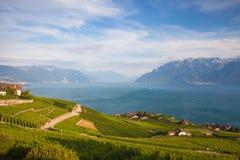Vineyards of the Lavaux region over lake Leman,Switzerland Stock Photos