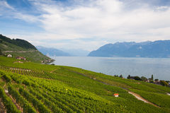Vineyards of the Lavaux region,Switzerland Royalty Free Stock Photo