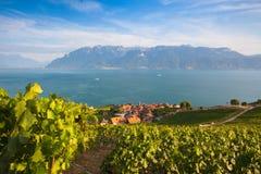 Vineyards of the Lavaux region,Switzerland Royalty Free Stock Photos