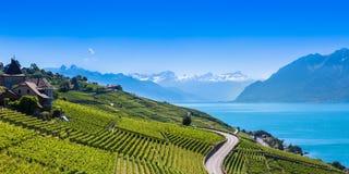 Vineyards in Lavaux region - Terrasses de Lavaux terraces, Switz Stock Images