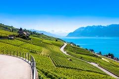 Vineyards in Lavaux region - Terrasses de Lavaux terraces, Switz Stock Image
