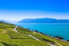 Vineyards in Lavaux region - Terrasses de Lavaux terraces, Switz Royalty Free Stock Image