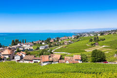 Vineyards in Lavaux region - Terrasses de Lavaux terraces, Switz Royalty Free Stock Images