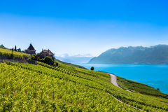 Vineyards in Lavaux region - Terrasses de Lavaux terraces, Switz Royalty Free Stock Photos