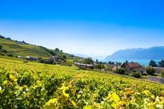 Vineyards in Lavaux region - Terrasses de Lavaux terraces, Switz Royalty Free Stock Photo
