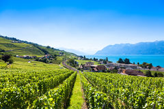 Vineyards in Lavaux region - Terrasses de Lavaux terraces, Switz Royalty Free Stock Image