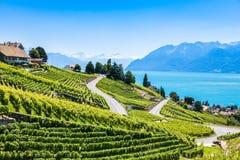 Vineyards in Lavaux region - Terrasses de Lavaux terraces, Switz Royalty Free Stock Photography