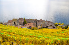 Vineyards in Lavaux, Switzerland Stock Photos