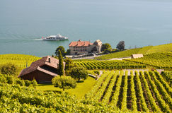 Vineyards in Lavaux, Switzerland Royalty Free Stock Photography