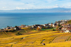 Vineyards in Lavaux - Terrasse de Lavaux, Switzerl Royalty Free Stock Images