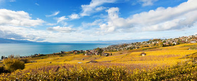 Vineyards in Lavaux - Terrasse de Lavaux, Switzerl Royalty Free Stock Photography