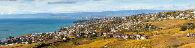 Vineyards in Lavaux - Terrasse de Lavaux, Switzerl Royalty Free Stock Photos