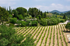 Vineyards of Le Castellet Royalty Free Stock Image