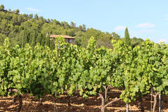Vineyards in Le Val, Provence, France. Vineyard landscape near Le Val. Le Val (Lo Vau in Occitan) is a commune in the Var department in the Provence-Alpes-Côte Royalty Free Stock Photos
