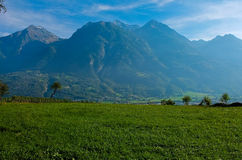 Vineyards located in Aosta Valley with mountains in the background. Italy royalty free stock photo