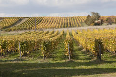 Vineyards of Loire Valley Stock Photos