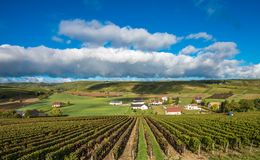 Vineyards of Loire Valley, France Royalty Free Stock Image