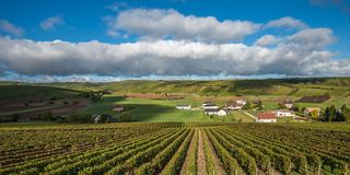 Vineyards of Loire Valley, France.  royalty free stock images