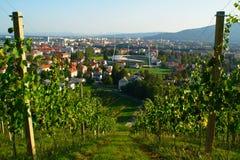 Vineyards In Maribor, Slovenia Stock Image