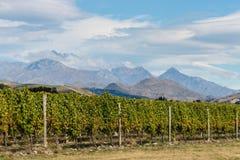 Vineyards in Marlborough. New Zealand stock image