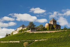 Vineyards at the Middle Rhine Valley Stock Image