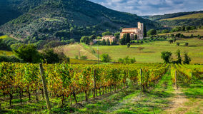 Vineyards and the monastery in Tuscany Stock Image
