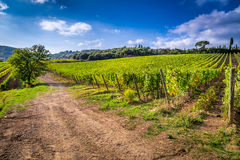 Vineyards and the monastery in Tuscany Royalty Free Stock Photography