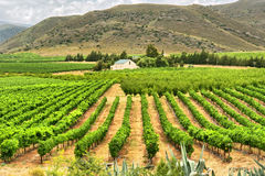 Vineyards of Montagu Stock Photos