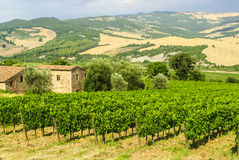 Vineyards of Montalcino (Tuscany) Royalty Free Stock Photos