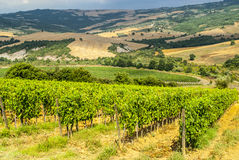 Vineyards of Montalcino (Tuscany) Stock Photos
