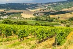 Vineyards of Montalcino (Tuscany) Stock Photos