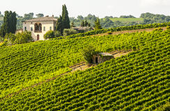 Vineyards of Montalcino (Tuscany) Stock Image
